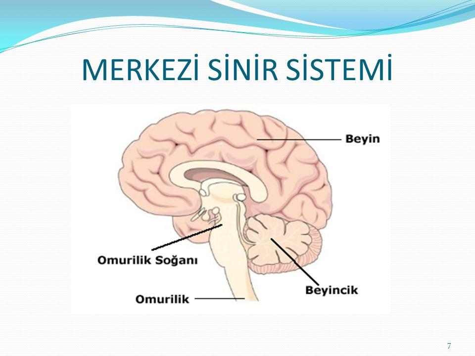 BEYİN: 5 duyu organından gelen bilgileri değerlendirir.