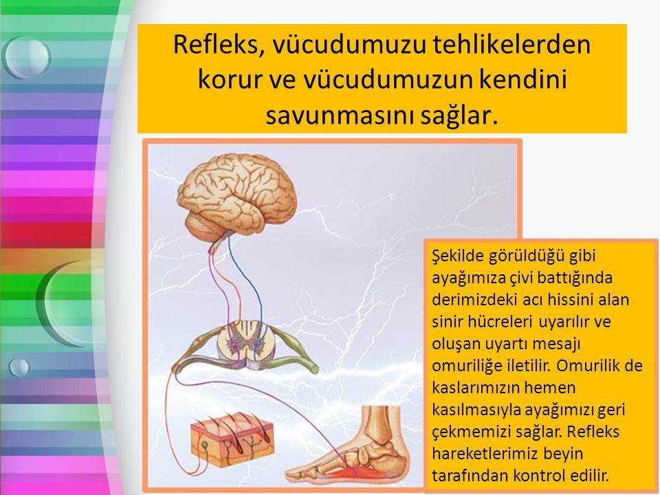 Refleks, vücudumuzu tehlikelerden korur ve vücudumuzun kendini savunmasını sağlar. Şekilde görüldüğü gibi ayağımıza çivi battığında derimizdeki acı hi