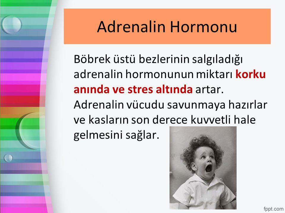 Adrenalin Hormonu Böbrek üstü bezlerinin salgıladığı adrenalin hormonunun miktarı korku anında ve stres altında artar. Adrenalin vücudu savunmaya hazı