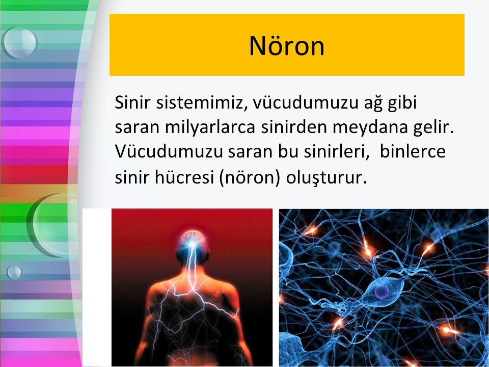 Nöron Sinir sistemimiz, vücudumuzu ağ gibi saran milyarlarca sinirden meydana gelir. Vücudumuzu saran bu sinirleri, binlerce sinir hücresi (nöron) olu