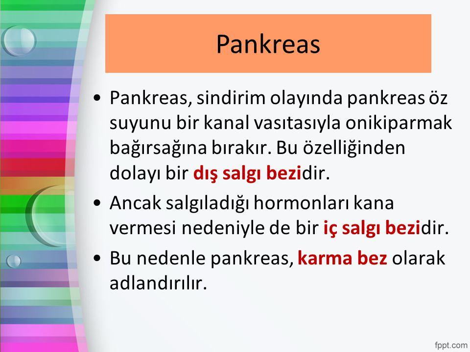 Pankreas Pankreas, sindirim olayında pankreas öz suyunu bir kanal vasıtasıyla onikiparmak bağırsağına bırakır. Bu özelliğinden dolayı bir dış salgı be
