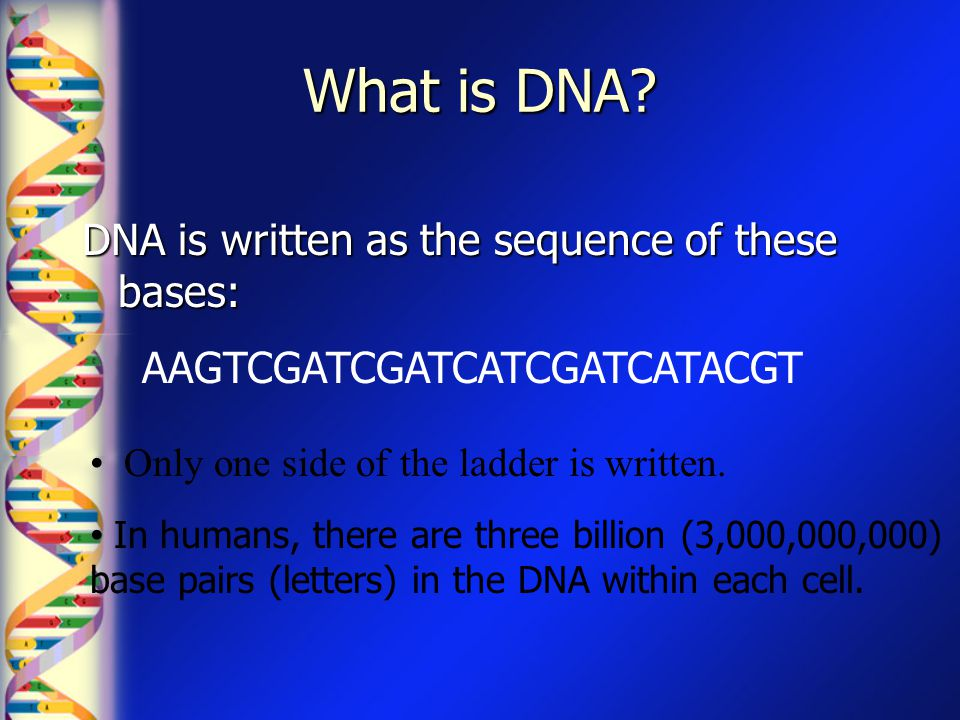 What is DNA? DNA is written as the sequence of these bases: AAGTCGATCGATCATCGATCATACGT In humans, there are three billion (3,000,000,000) base pairs (