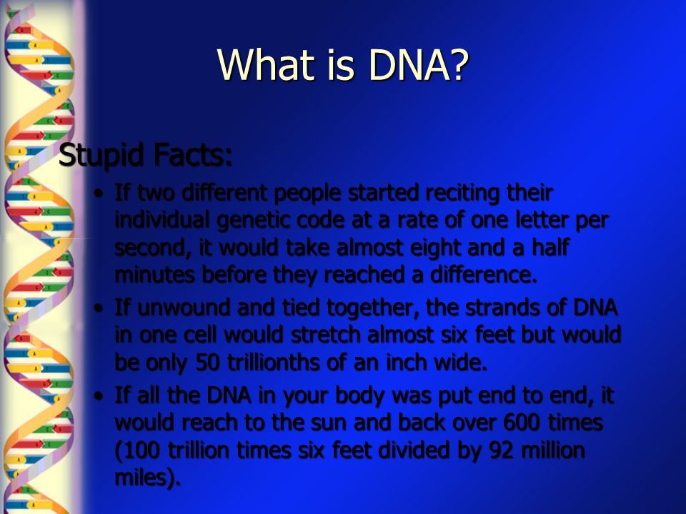 What is DNA? Stupid Facts: If two different people started reciting their individual genetic code at a rate of one letter per second, it would take al