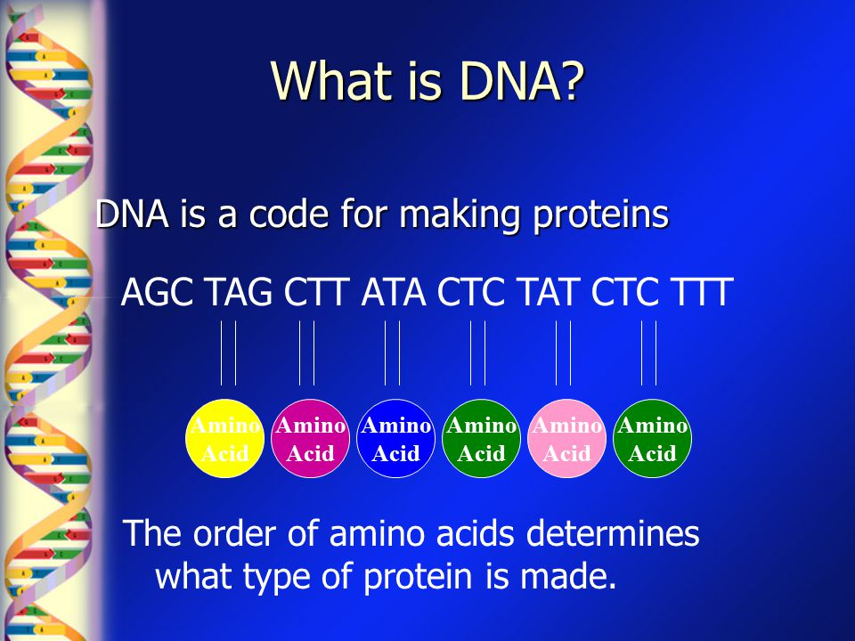 What is DNA? DNA is a code for making proteins AGC TAG CTT ATA CTC TAT CTC TTT Amino Acid Amino Acid Amino Acid Amino Acid Amino Acid Amino Acid The o