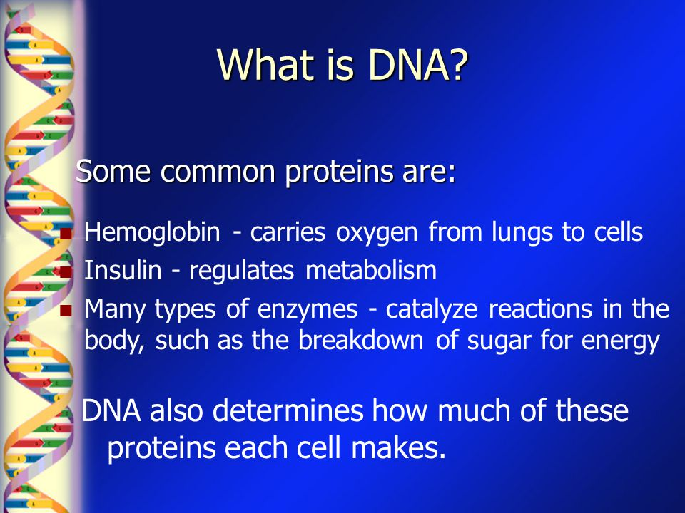 What is DNA? Some common proteins are: Hemoglobin - carries oxygen from lungs to cells Insulin - regulates metabolism Many types of enzymes - catalyze
