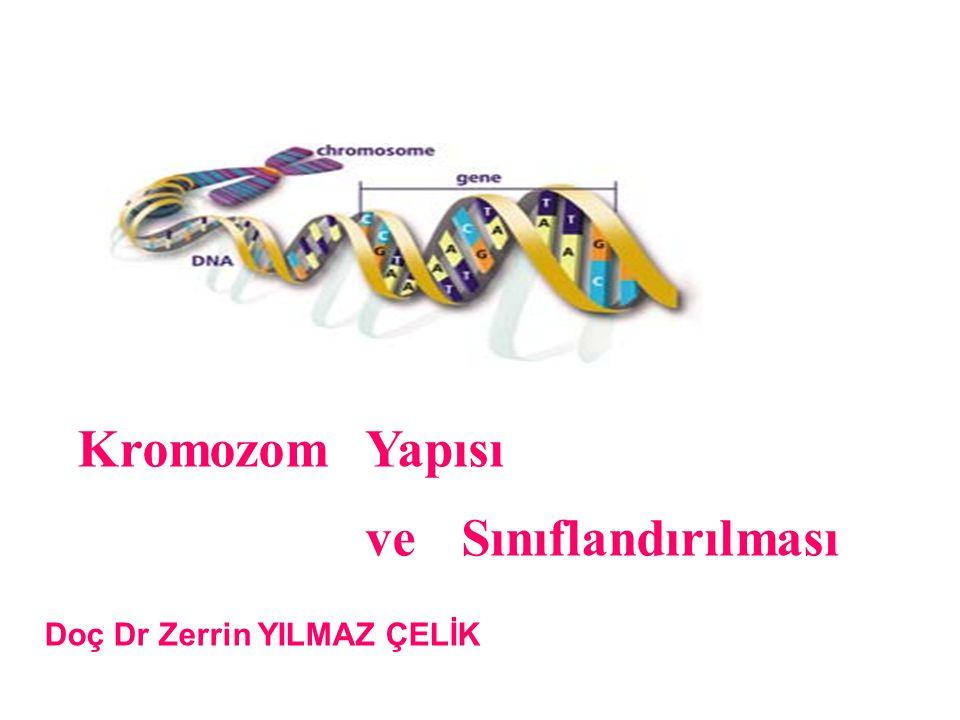 Doç Dr Zerrin YILMAZ ÇELİK Kromozom Yapısı ve Sınıflandırılması