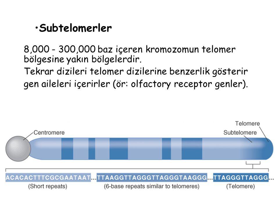 Subtelomerler 8,000 - 300,000 baz içeren kromozomun telomer bölgesine yakın bölgelerdir. Tekrar dizileri telomer dizilerine benzerlik gösterir gen ail