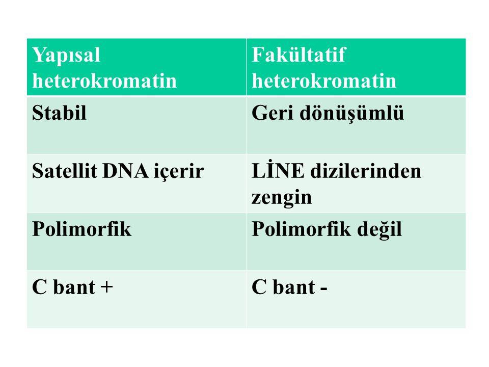 Yapısal heterokromatin Fakültatif heterokromatin StabilGeri dönüşümlü Satellit DNA içerirLİNE dizilerinden zengin PolimorfikPolimorfik değil C bant +C