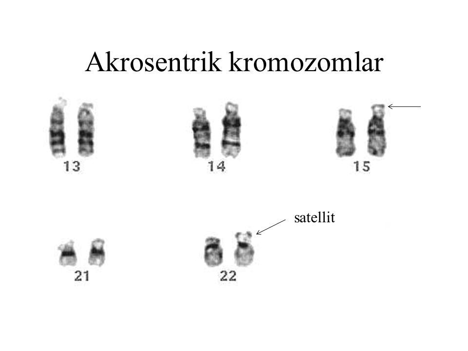 Akrosentrik kromozomlar satellit