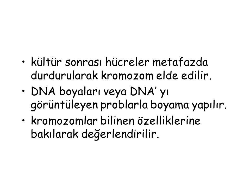kültür sonrası hücreler metafazda durdurularak kromozom elde edilir. DNA boyaları veya DNA' yı görüntüleyen problarla boyama yapılır. kromozomlar bili