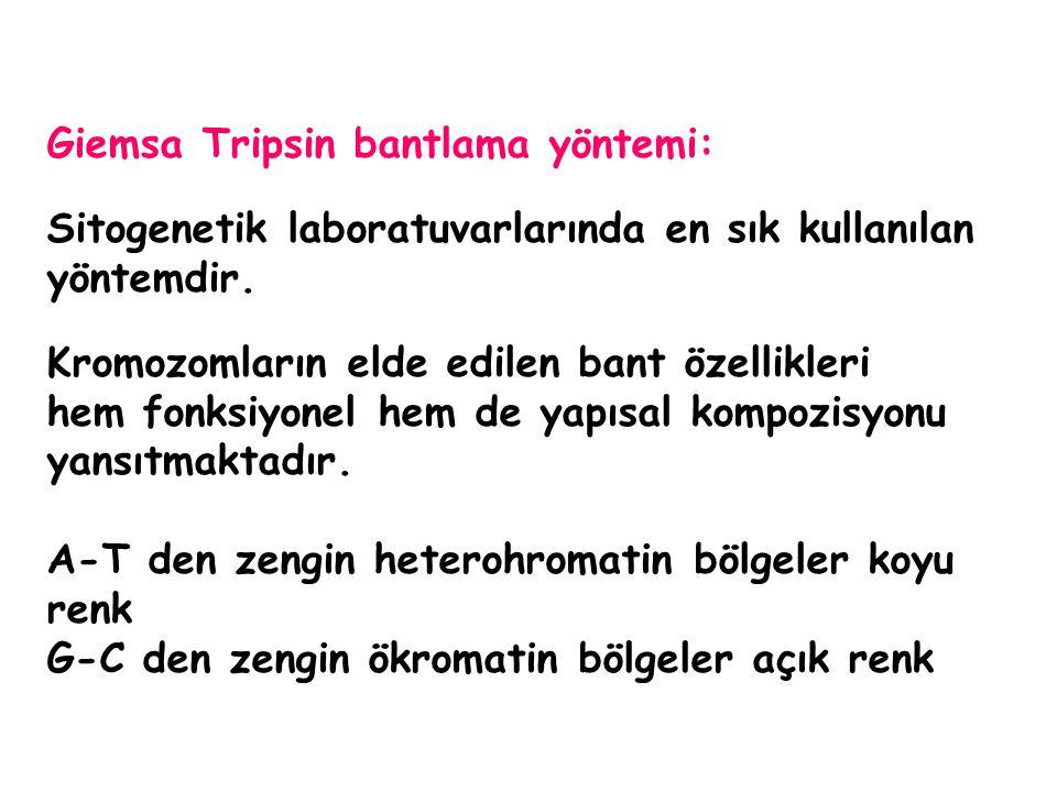 Giemsa Tripsin bantlama yöntemi: Sitogenetik laboratuvarlarında en sık kullanılan yöntemdir. Kromozomların elde edilen bant özellikleri hem fonksiyone