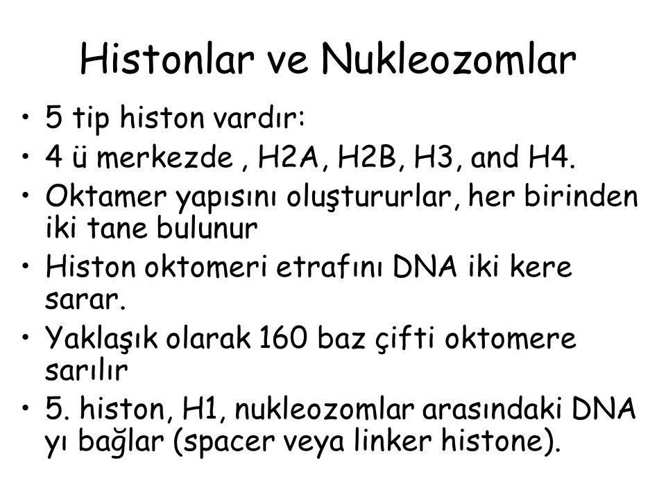 Histonlar ve Nukleozomlar 5 tip histon vardır: 4 ü merkezde, H2A, H2B, H3, and H4. Oktamer yapısını oluştururlar, her birinden iki tane bulunur Histon