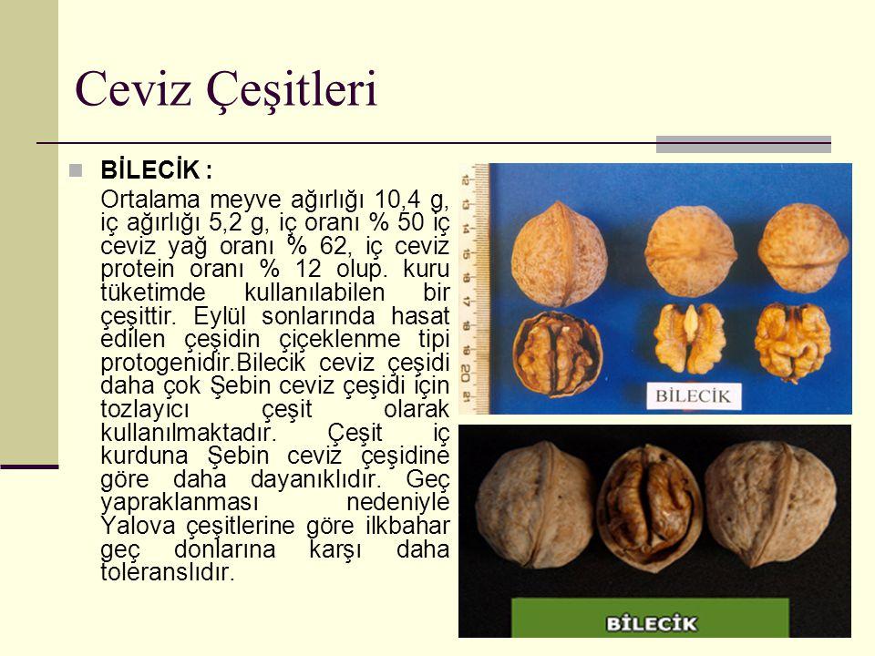 Ceviz Çeşitleri BİLECİK : Ortalama meyve ağırlığı 10,4 g, iç ağırlığı 5,2 g, iç oranı % 50 iç ceviz yağ oranı % 62, iç ceviz protein oranı % 12 olup.