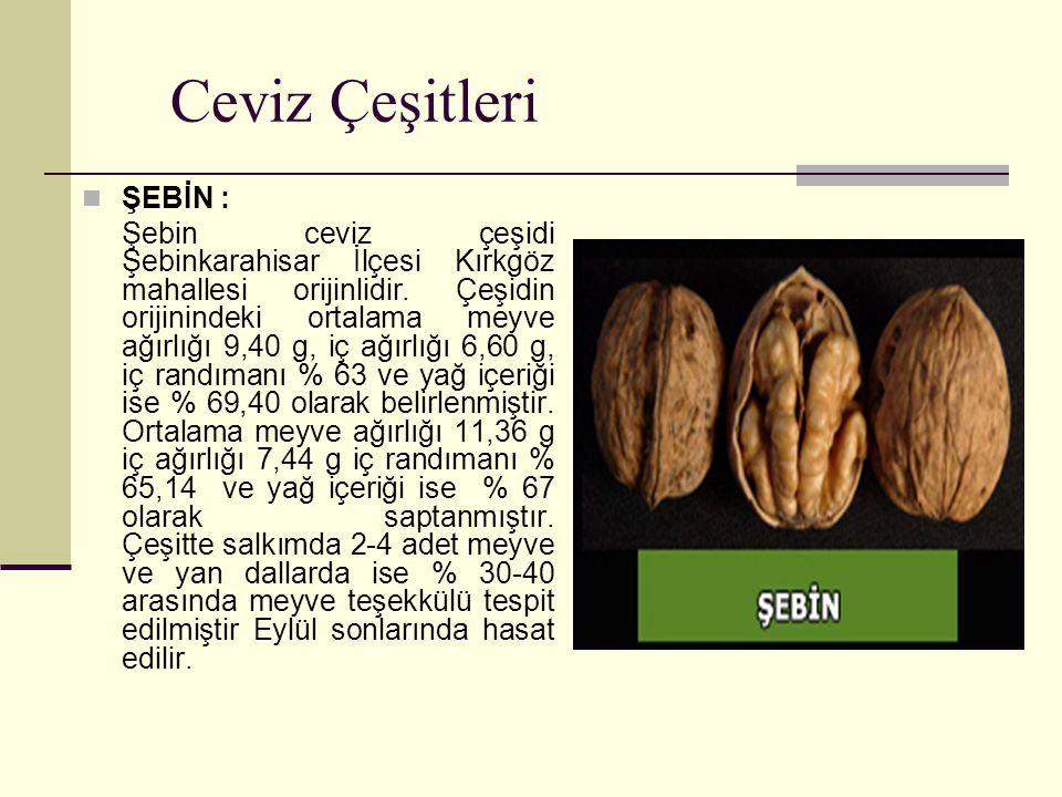 Ceviz Çeşitleri ŞEBİN : Şebin ceviz çeşidi Şebinkarahisar İlçesi Kırkgöz mahallesi orijinlidir. Çeşidin orijinindeki ortalama meyve ağırlığı 9,40 g, i