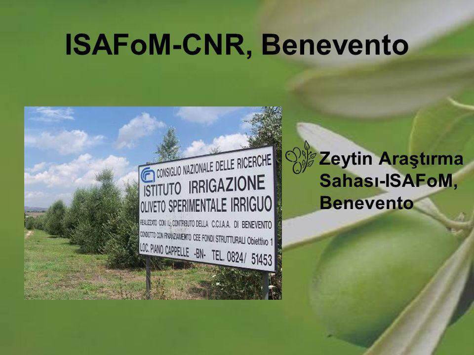 ISAFoM-CNR, Benevento Zeytin Araştırma Sahası-ISAFoM, Benevento