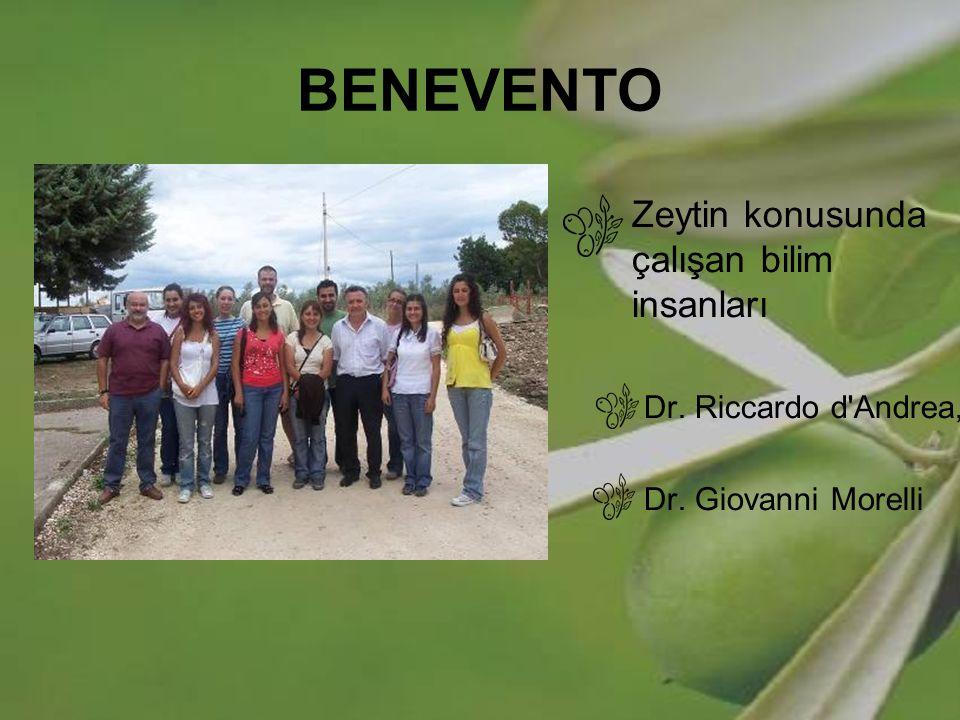 BENEVENTO Zeytin konusunda çalışan bilim insanları Dr. Riccardo d'Andrea, Dr. Giovanni Morelli