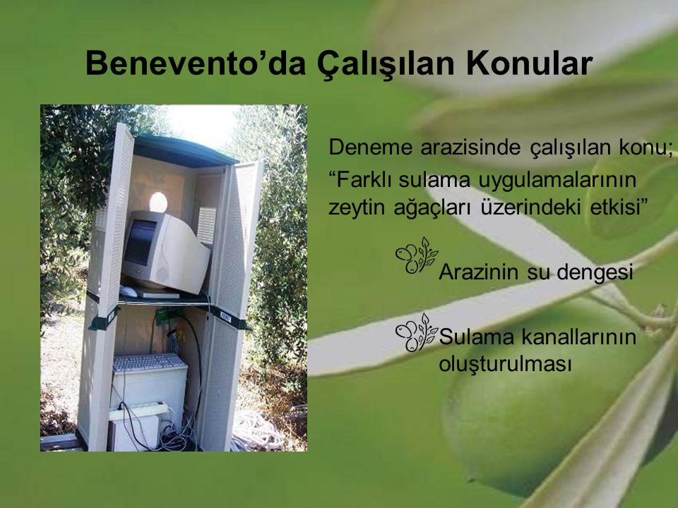 """Benevento'da Çalışılan Konular Deneme arazisinde çalışılan konu; """"Farklı sulama uygulamalarının zeytin ağaçları üzerindeki etkisi"""" Arazinin su dengesi"""
