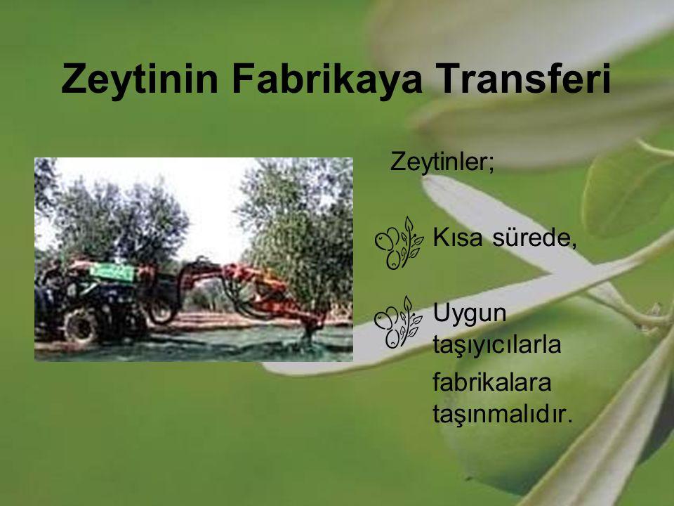 Zeytinin Fabrikaya Transferi Zeytinler; Kısa sürede, Uygun taşıyıcılarla fabrikalara taşınmalıdır.