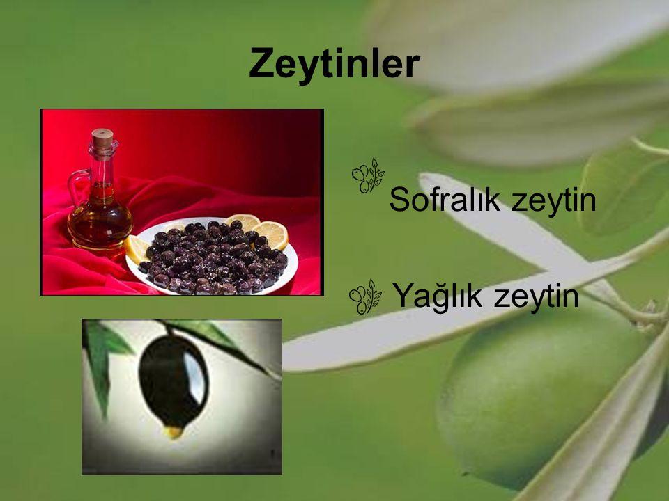 Zeytinler Sofralık zeytin Yağlık zeytin