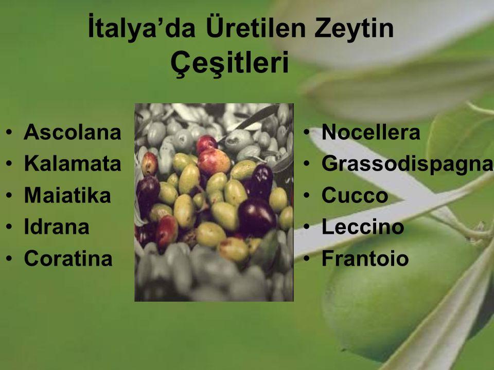 İtalya'da Üretilen Zeytin Çeşitleri Ascolana Kalamata Maiatika Idrana Coratina Nocellera Grassodispagna Cucco Leccino Frantoio