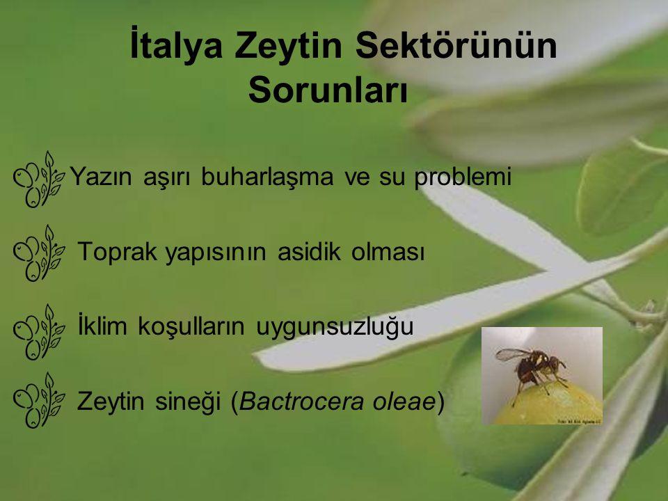 İtalya Zeytin Sektörünün Sorunları Yazın aşırı buharlaşma ve su problemi Toprak yapısının asidik olması İklim koşulların uygunsuzluğu Zeytin sineği (B