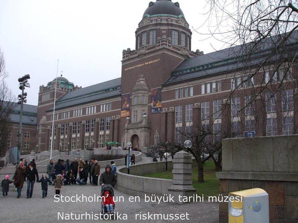 Stockholm' un en büyük tarihi müzesi Naturhistorika riskmusset