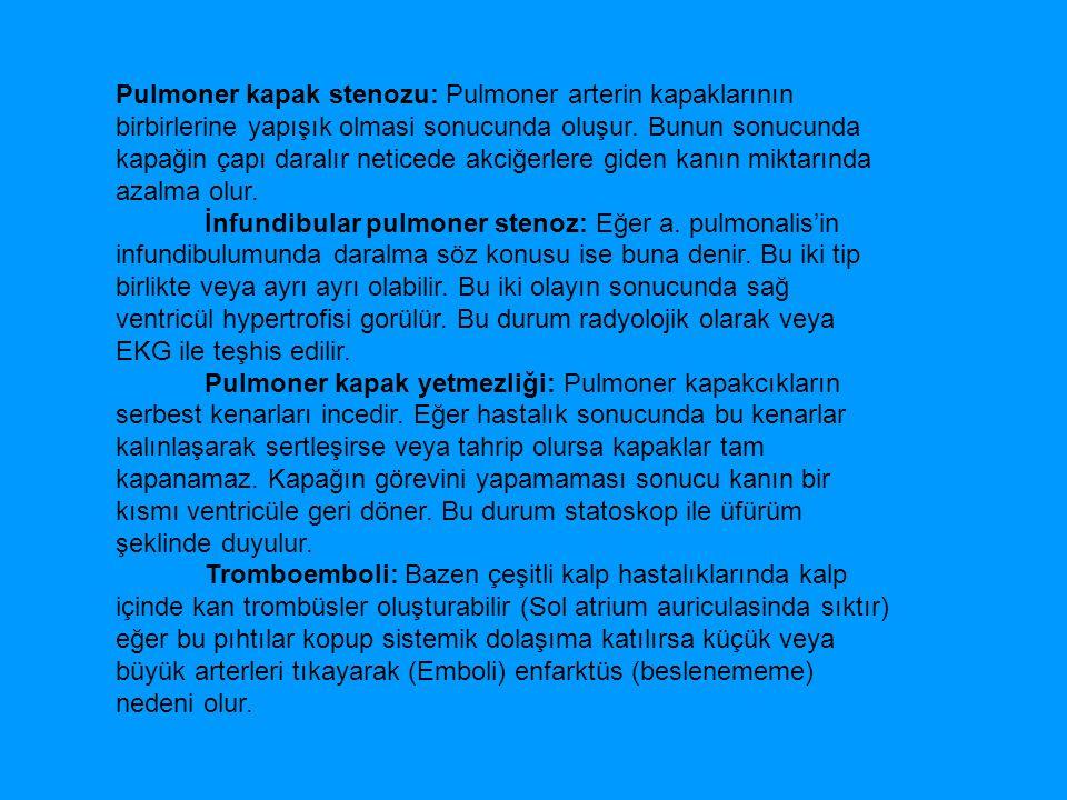 A.CAROTİS EXTERNA 1- A.