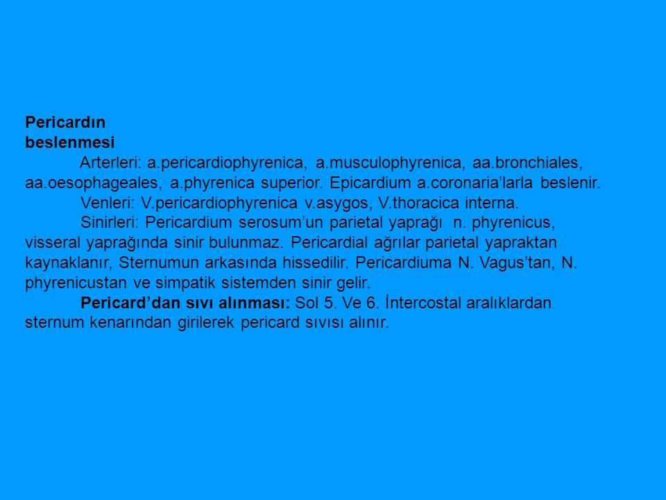 Pericardın beslenmesi Arterleri: a.pericardiophyrenica, a.musculophyrenica, aa.bronchiales, aa.oesophageales, a.phyrenica superior. Epicardium a.coron