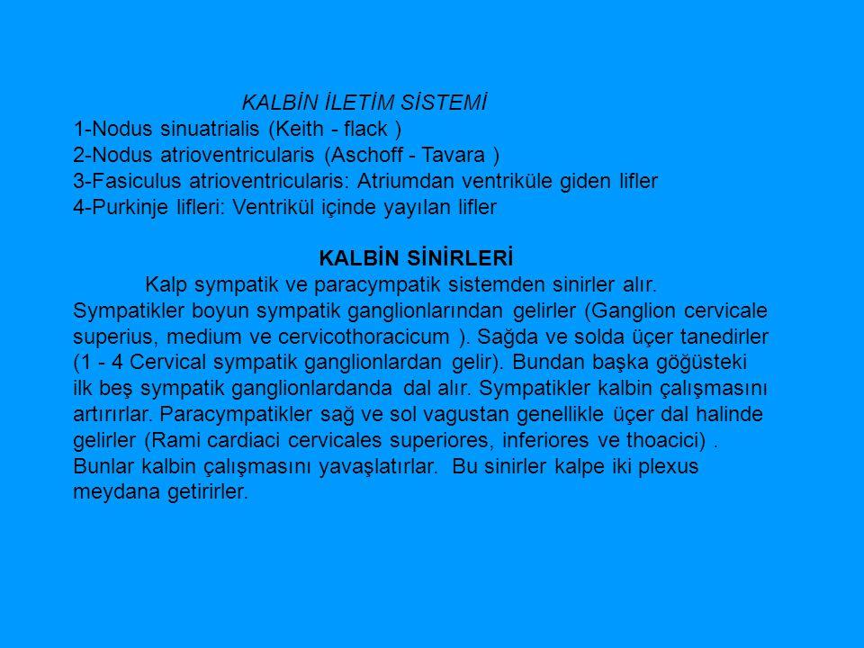 KALBİN İLETİM SİSTEMİ 1-Nodus sinuatrialis (Keith - flack ) 2-Nodus atrioventricularis (Aschoff - Tavara ) 3-Fasiculus atrioventricularis: Atriumdan v