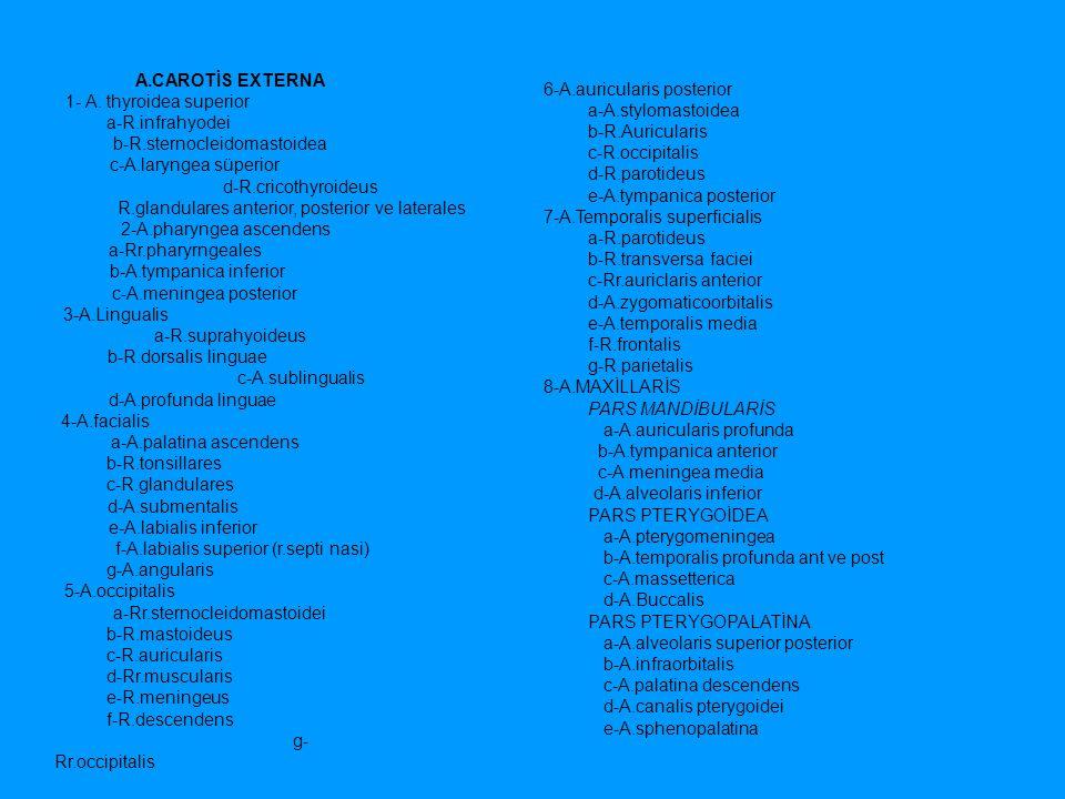 A.CAROTİS EXTERNA 1- A. thyroidea superior a-R.infrahyodei b-R.sternocleidomastoidea c-A.laryngea süperior d-R.cricothyroideus R.glandulares anterior,