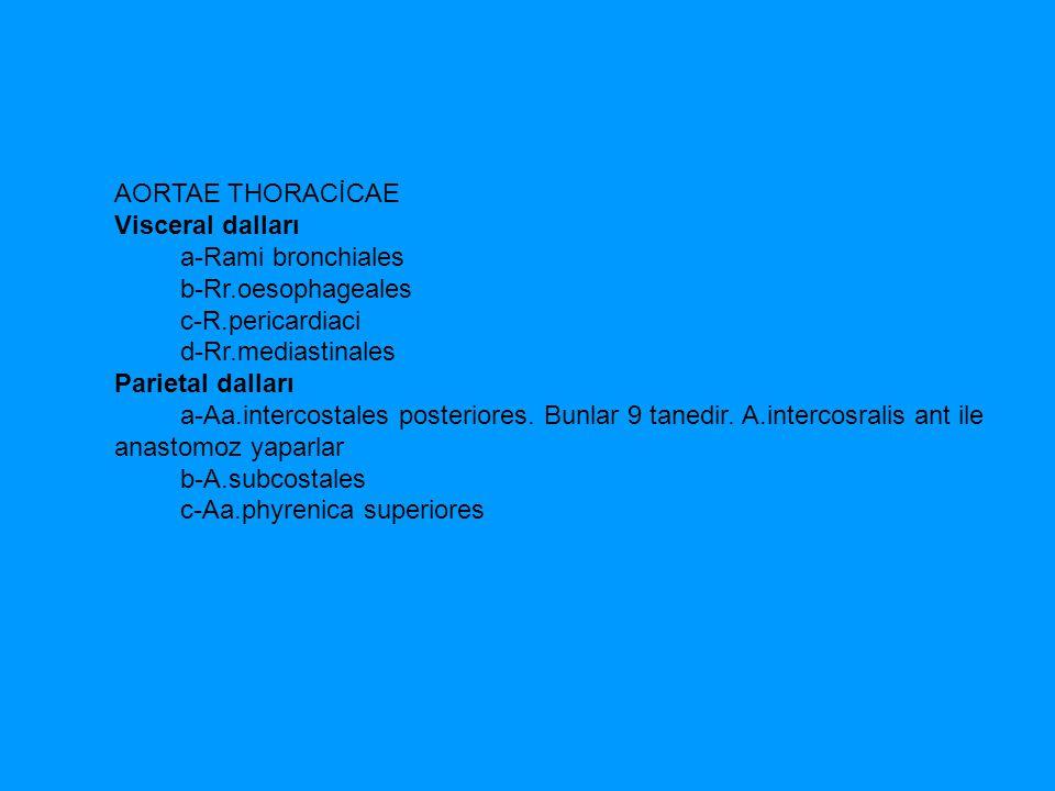 AORTAE THORACİCAE Visceral dalları a-Rami bronchiales b-Rr.oesophageales c-R.pericardiaci d-Rr.mediastinales Parietal dalları a-Aa.intercostales poste