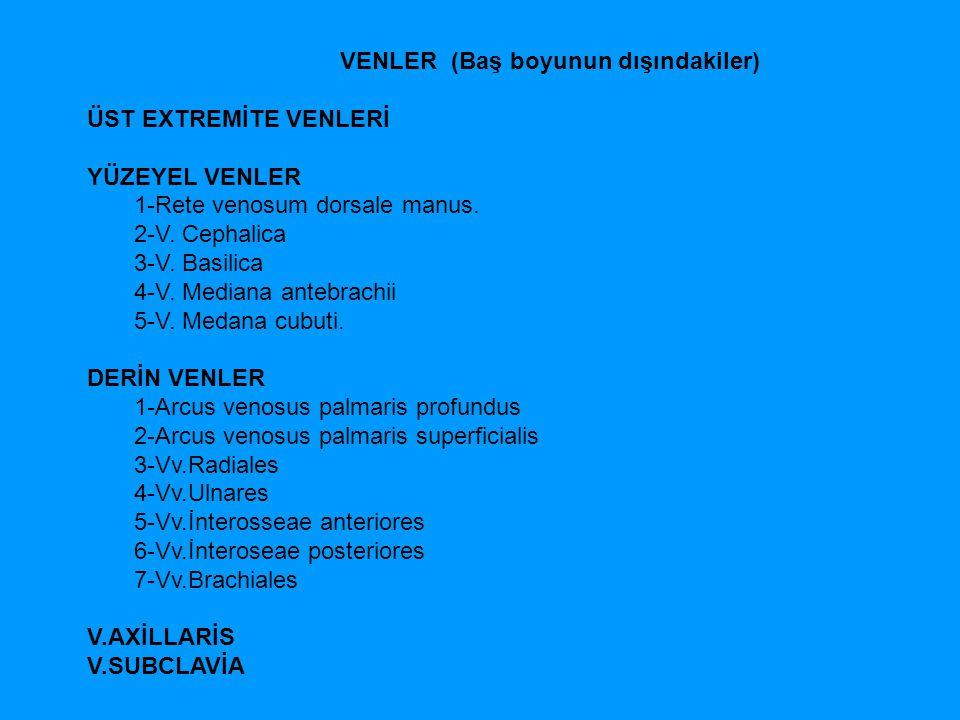 VENLER (Baş boyunun dışındakiler) ÜST EXTREMİTE VENLERİ YÜZEYEL VENLER 1-Rete venosum dorsale manus. 2-V. Cephalica 3-V. Basilica 4-V. Mediana antebra