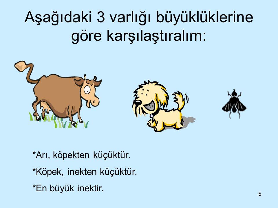 5 Aşağıdaki 3 varlığı büyüklüklerine göre karşılaştıralım: *Arı, köpekten küçüktür. *Köpek, inekten küçüktür. *En büyük inektir.