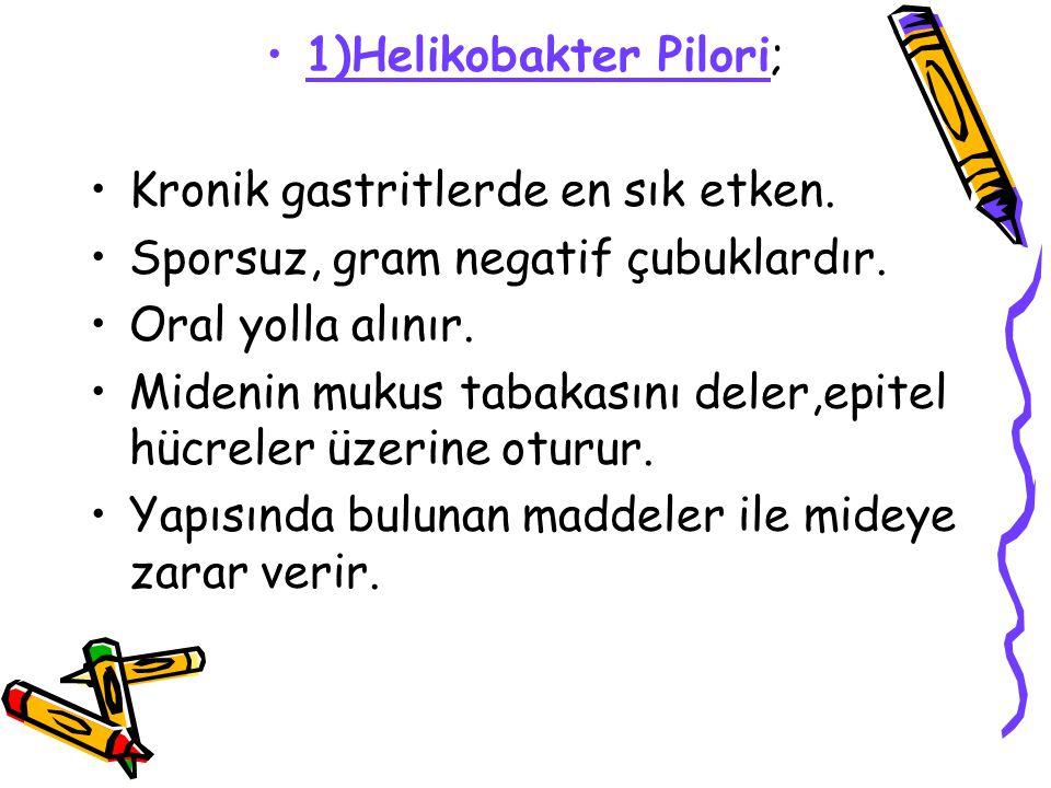 1)Helikobakter Pilori; Kronik gastritlerde en sık etken. Sporsuz, gram negatif çubuklardır. Oral yolla alınır. Midenin mukus tabakasını deler,epitel h