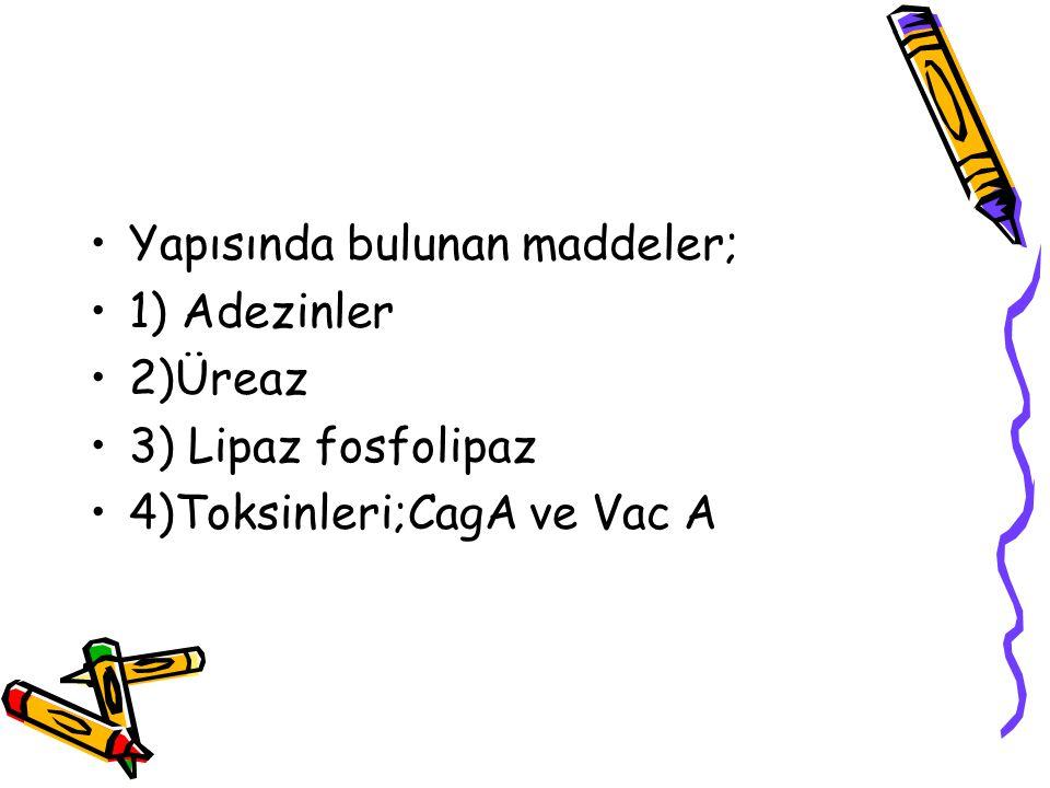 Yapısında bulunan maddeler; 1) Adezinler 2)Üreaz 3) Lipaz fosfolipaz 4)Toksinleri;CagA ve Vac A