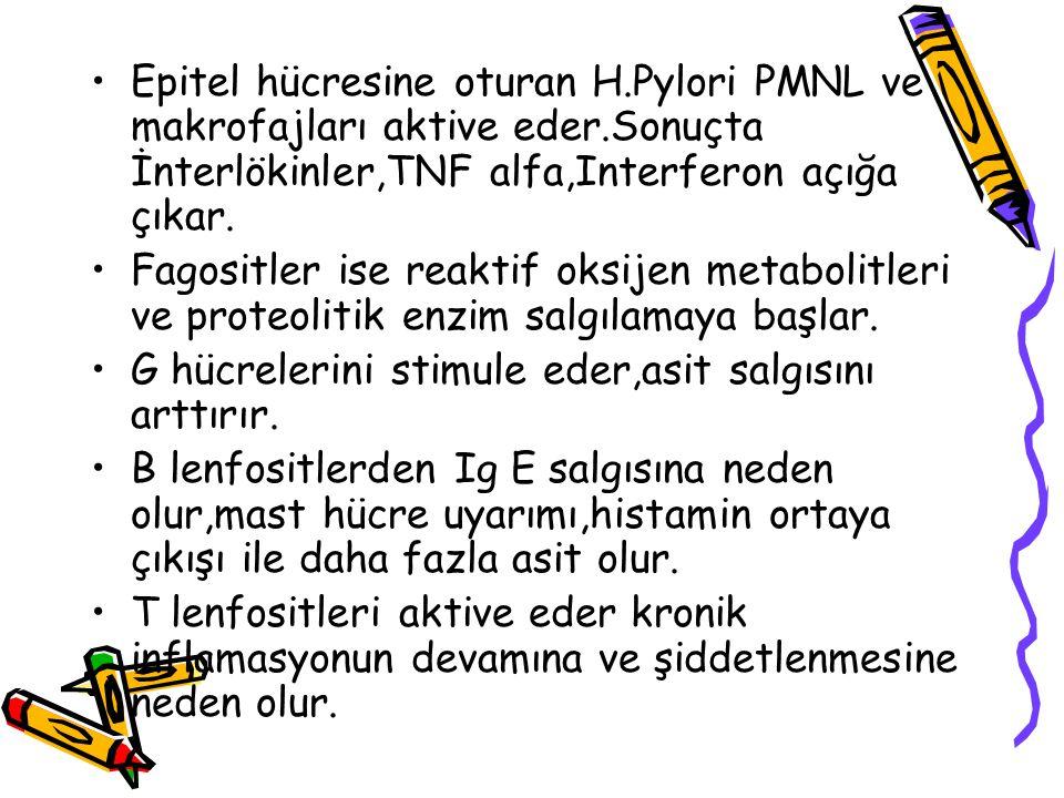 Epitel hücresine oturan H.Pylori PMNL ve makrofajları aktive eder.Sonuçta İnterlökinler,TNF alfa,Interferon açığa çıkar. Fagositler ise reaktif oksije