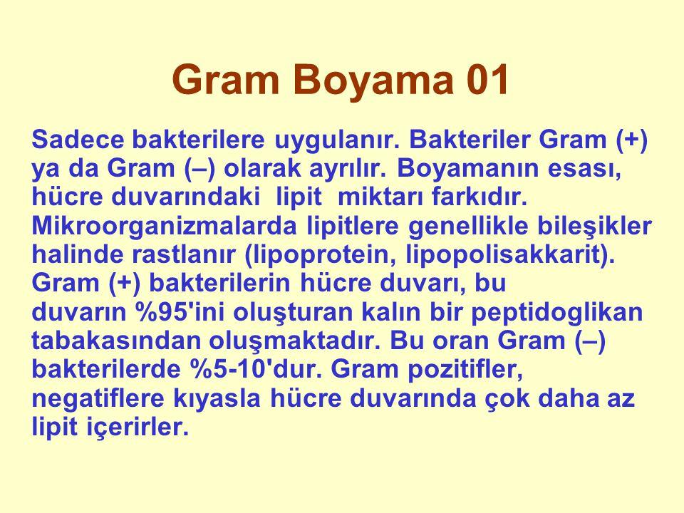 Gram Boyama 01 Sadece bakterilere uygulanır. Bakteriler Gram (+) ya da Gram (–) olarak ayrılır. Boyamanın esası, hücre duvarındaki lipit miktarı farkı