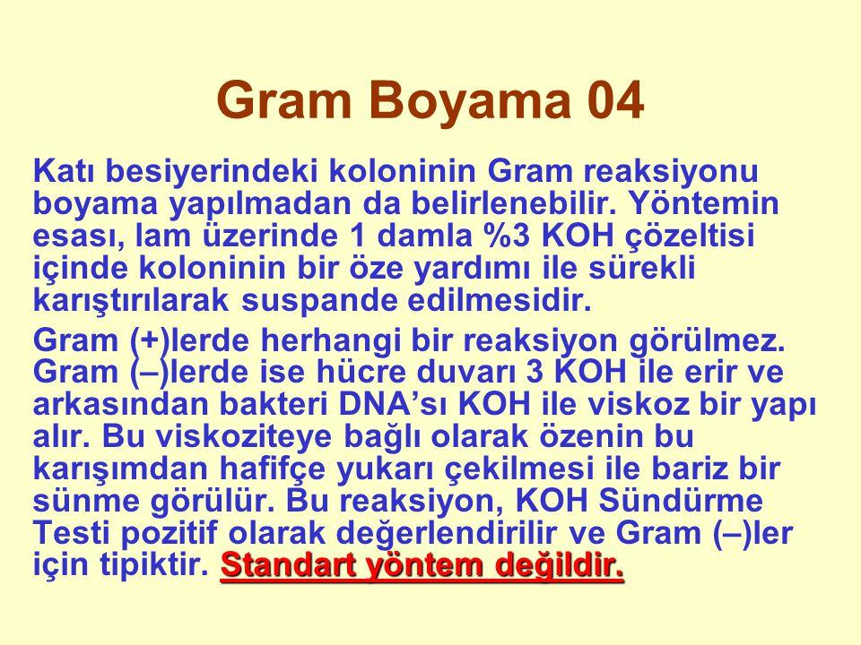 Gram Boyama 04 Katı besiyerindeki koloninin Gram reaksiyonu boyama yapılmadan da belirlenebilir. Yöntemin esası, lam üzerinde 1 damla %3 KOH çözeltisi