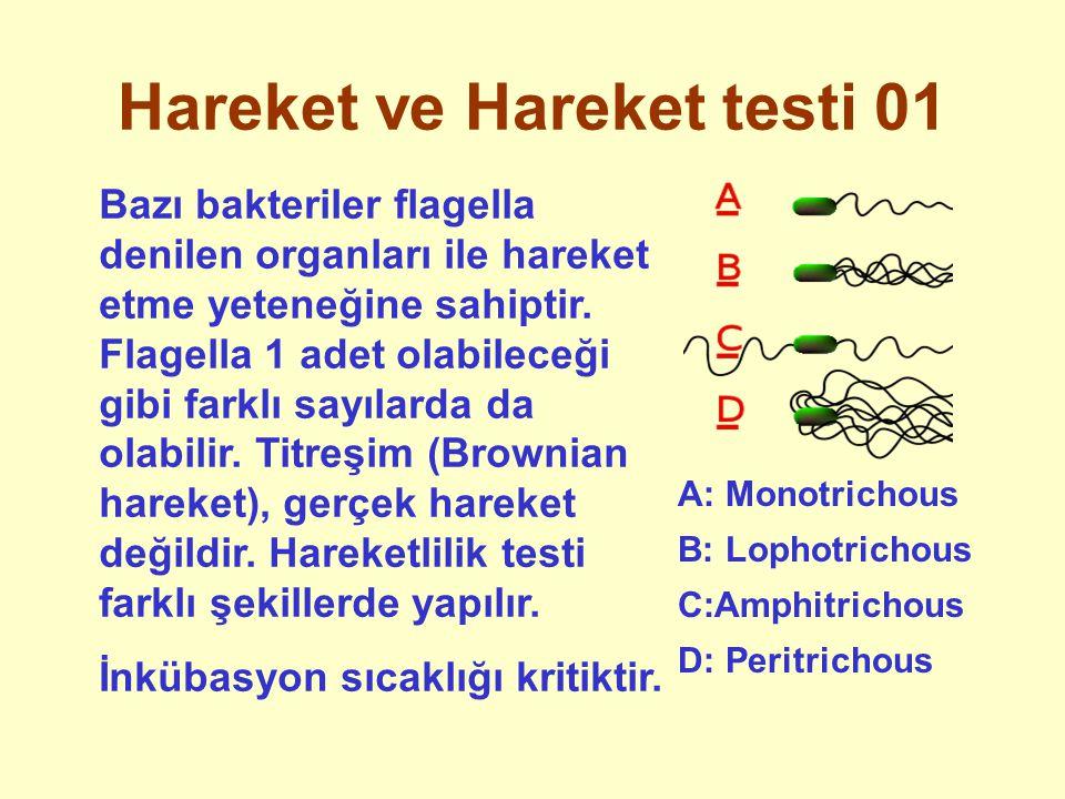 Hareket ve Hareket testi 01 Bazı bakteriler flagella denilen organları ile hareket etme yeteneğine sahiptir. Flagella 1 adet olabileceği gibi farklı s