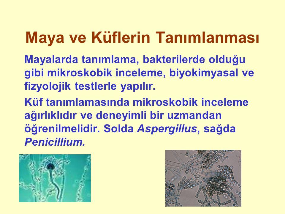 Maya ve Küflerin Tanımlanması Mayalarda tanımlama, bakterilerde olduğu gibi mikroskobik inceleme, biyokimyasal ve fizyolojik testlerle yapılır. Küf ta