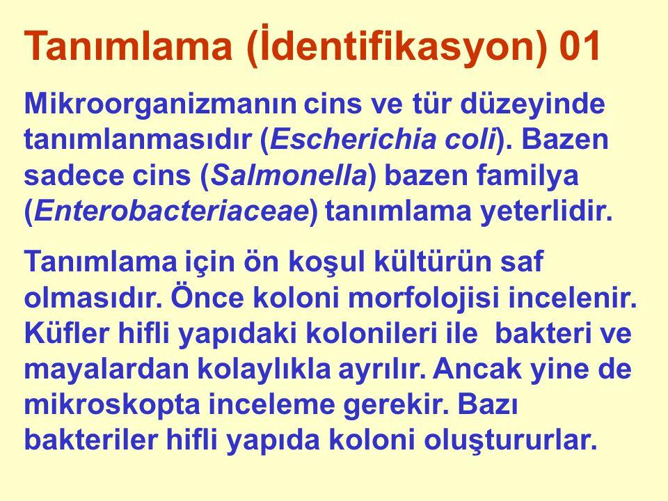 Tanımlama (İdentifikasyon) 01 Mikroorganizmanın cins ve tür düzeyinde tanımlanmasıdır (Escherichia coli). Bazen sadece cins (Salmonella) bazen familya