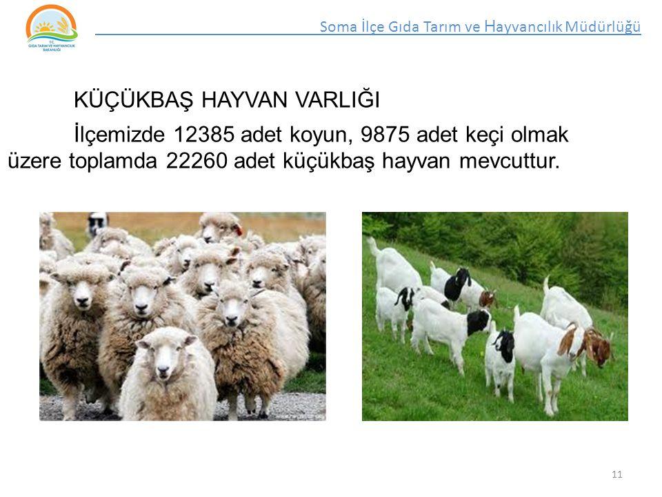 KÜÇÜKBAŞ HAYVAN VARLIĞI İlçemizde 12385 adet koyun, 9875 adet keçi olmak üzere toplamda 22260 adet küçükbaş hayvan mevcuttur.