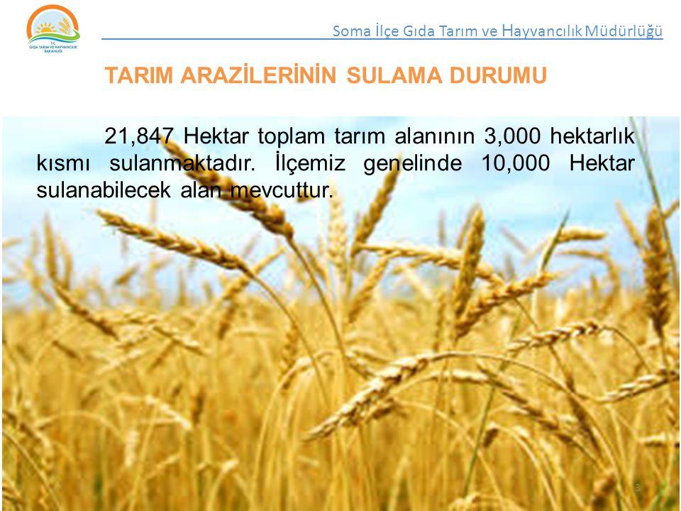 TARIM ARAZİLERİNİN SULAMA DURUMU 21,847 Hektar toplam tarım alanının 3,000 hektarlık kısmı sulanmaktadır.