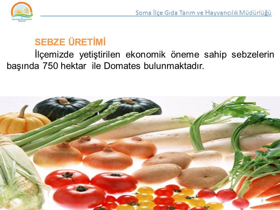 SEBZE ÜRETİMİ İlçemizde yetiştirilen ekonomik öneme sahip sebzelerin başında 750 hektar ile Domates bulunmaktadır.