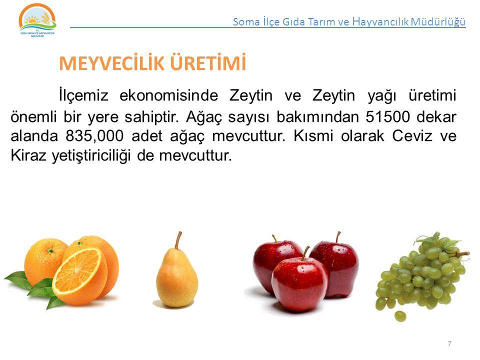 MEYVECİLİK ÜRETİMİ İlçemiz ekonomisinde Zeytin ve Zeytin yağı üretimi önemli bir yere sahiptir.