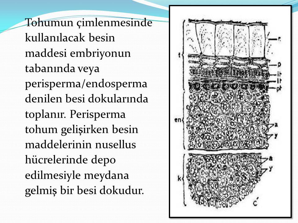 Tohumun çimlenmesinde kullanılacak besin maddesi embriyonun tabanında veya perisperma/endosperma denilen besi dokularında toplanır. Perisperma tohum g