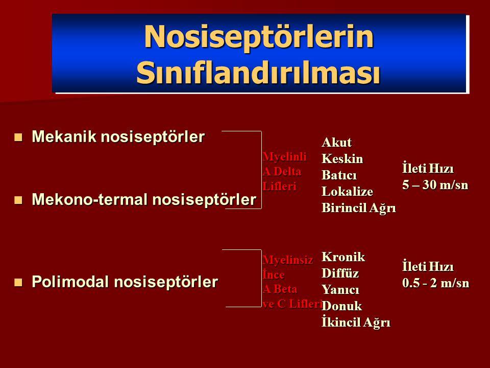 Nosiseptörlerin Sınıflandırılması Mekanik nosiseptörler Mekanik nosiseptörler Mekono-termal nosiseptörler Mekono-termal nosiseptörler Polimodal nosise