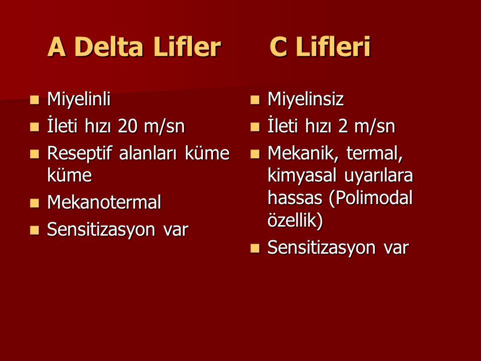 A Delta Lifler C Lifleri A Delta Lifler C Lifleri Miyelinli Miyelinli İleti hızı 20 m/sn İleti hızı 20 m/sn Reseptif alanları küme küme Reseptif alanl