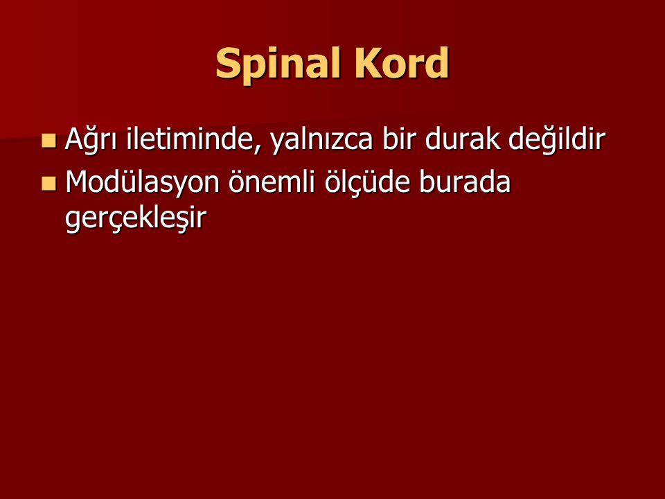 Spinal Kord Ağrı iletiminde, yalnızca bir durak değildir Ağrı iletiminde, yalnızca bir durak değildir Modülasyon önemli ölçüde burada gerçekleşir Modü