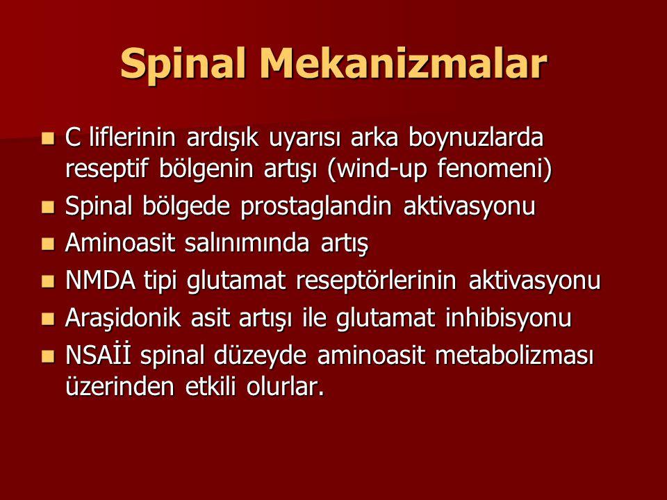Spinal Mekanizmalar C liflerinin ardışık uyarısı arka boynuzlarda reseptif bölgenin artışı (wind-up fenomeni) C liflerinin ardışık uyarısı arka boynuz